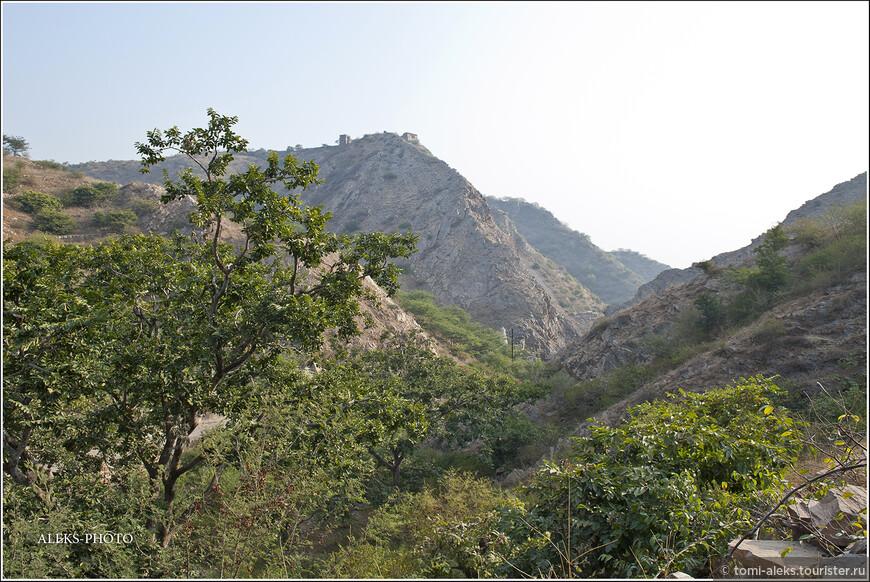 Обезьяны очень любят вот такие места, где много растительности и скалы.