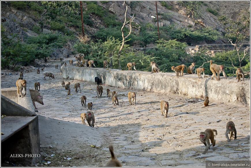 """Вот она - """"Дорога обезьян"""", по которой местные жители поднимаются прямо из Джайпура. А туристов возят вокруг - за много километров - к главному входу в монастырь..."""