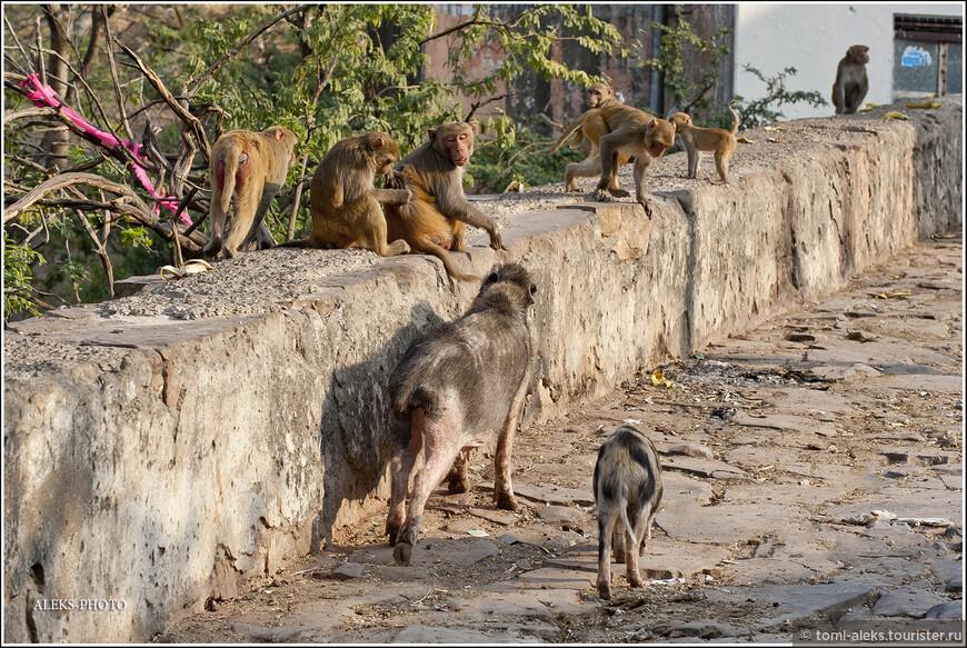 Уже сейчас, разбирая фото, я удивляюсь нашей смелости. дело в том, что обезьян там было не много, а очень много. И они нас не тронули...
