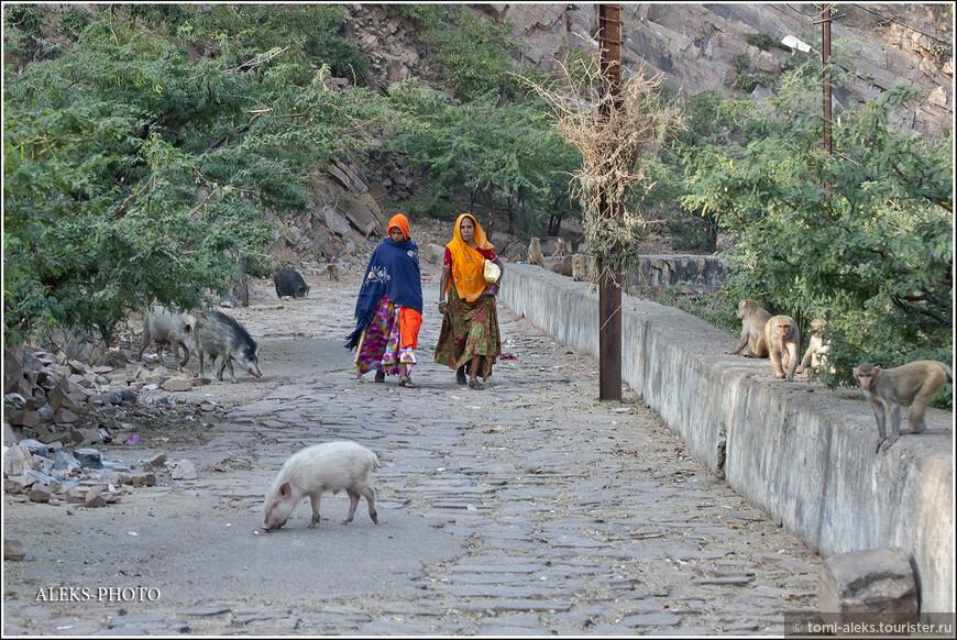 А вот они - местные жители. Идут с палочками, чтобы отмахиваться от назойливых животных...