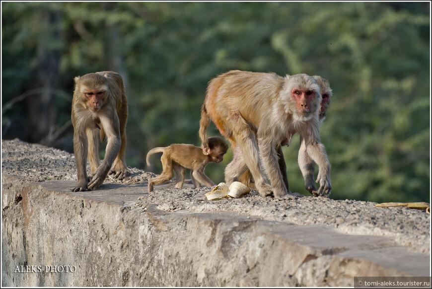"""Оказывается, Хануман (один из героев эпоса """"Рамаяна"""", сын полубожественной женщины Анджана и бога ветра Ваю) — один из самых популярных богов индуизма — вождь обезьян."""