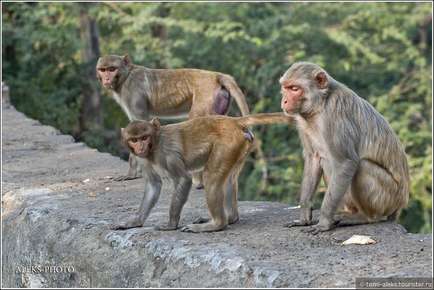 При всей привлекательности этих созданий, они часто ведут себя очень агрессивно...