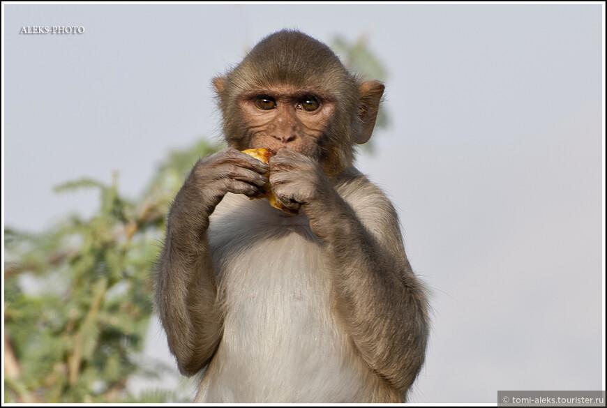 Любимое занятие - поедать фрукты...