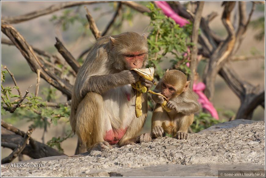 Малыши, которые становятся постарше, уже копируют действия своих родителей...