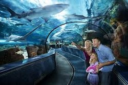 В Торонто открылся самый большой в Канаде аквариум