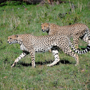 Кения, Масаи Мара