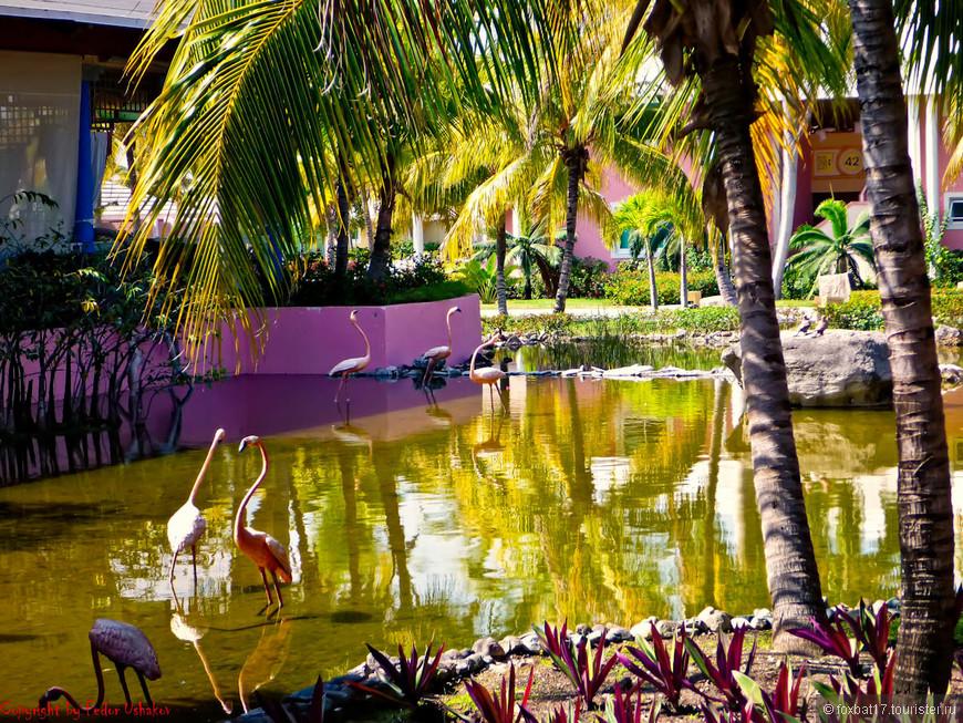Cuba [29.01.2011][Paradisus Rio De Oro Resort & Spa][13](01).jpg