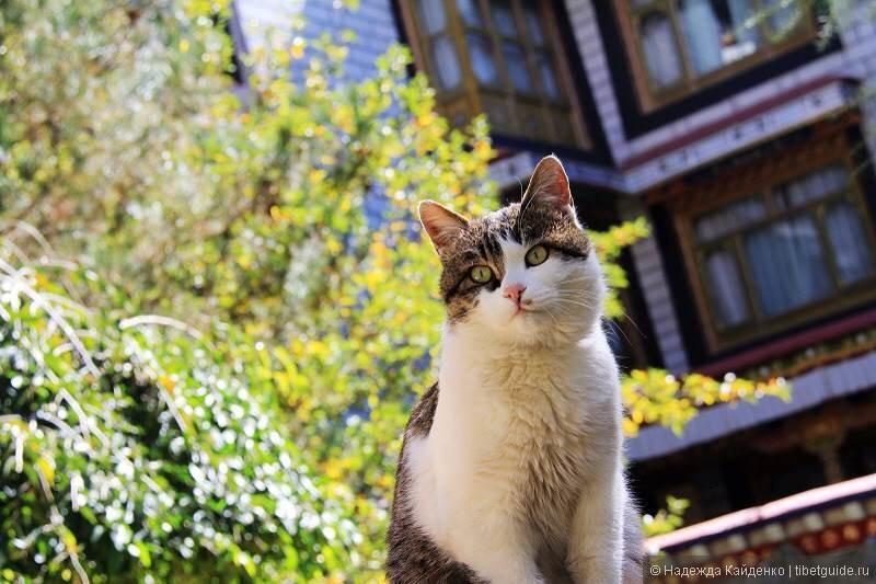 кот греется на осеннем солнышке
