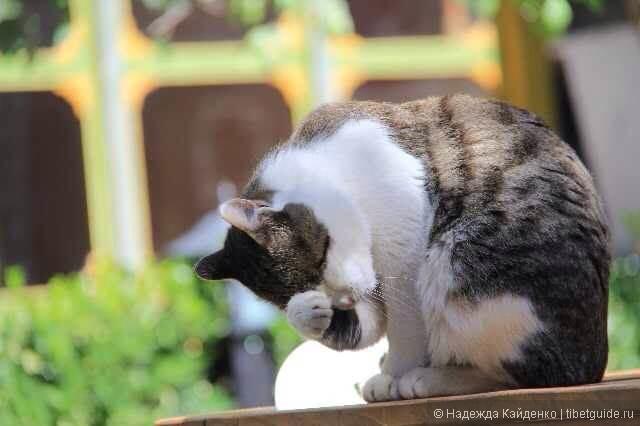 утренние кошачьи процедуры