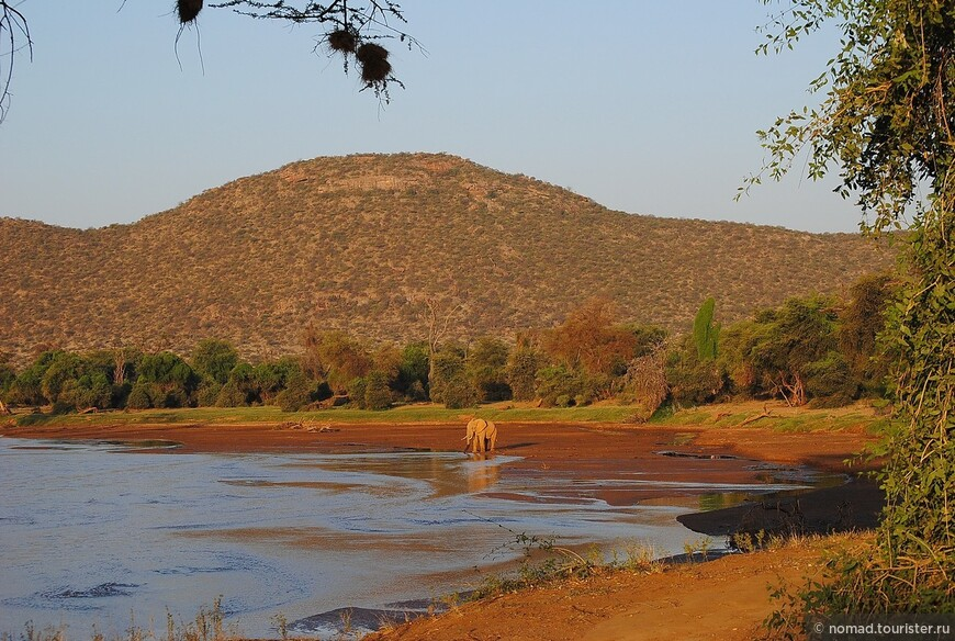 Африканский слон в интерьере