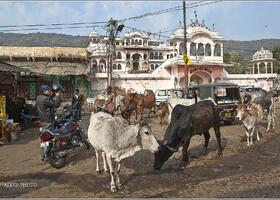 Придорожная пастораль (Индия)