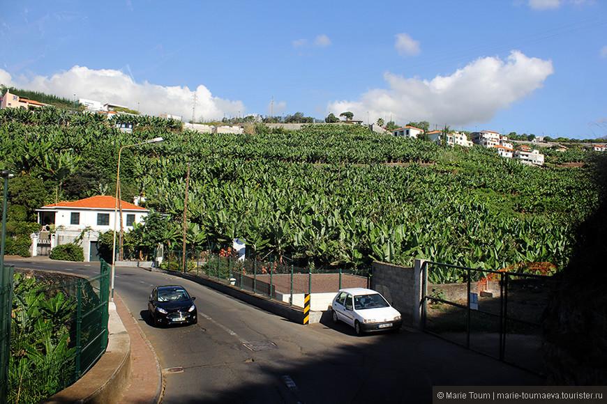 Банановые плантации. Мадейра
