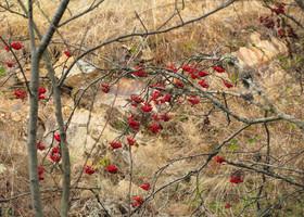 Осенние краски испанского леса