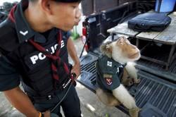Власти Таиланда созвали экспертный совет по безопасности туристов