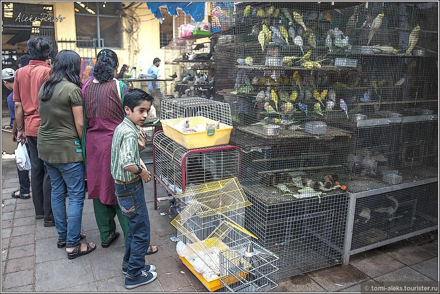 Ряды, в которых продают всякую живность, всегда вызывают интерес у публики. Хотя пекинский птичий рынок мне понравился во сто раз больше. Но ведь интересно сравнить...