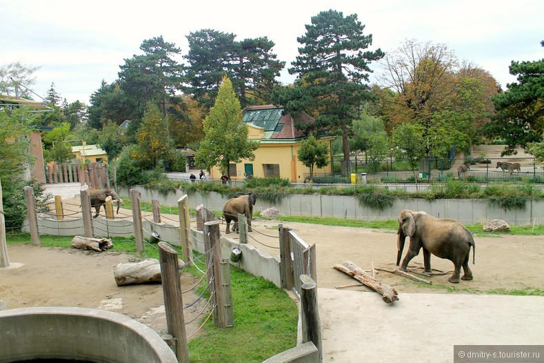 Венский зоопарк открытки, фото надписями картинка