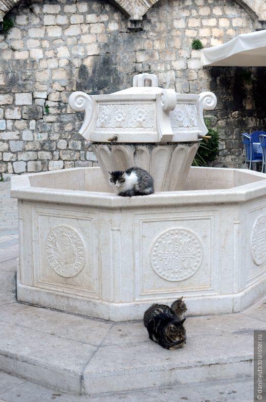 Все знают, что в Которе много кошек. Вообще, их везде в Черногории много, но в Которе и правда - огромное количество.