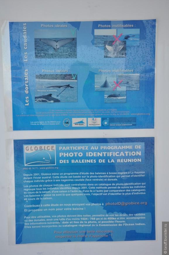 На Реюньоне есть специальная программа идентификации морских млекопитающих, в которой может поучаствовать любой желающий. На постере - правила участия. 3х4, на голубом фоне)))))