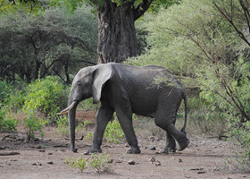 Танзания, Маньяра