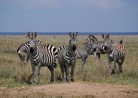Танзания, Серенгети