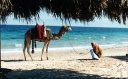 Россиянам разрешили отдыхать на курортах Египта