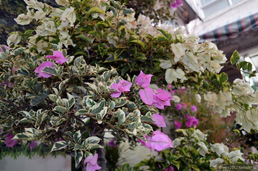 Вы когда-нибудь видели фикус Бенджамина с цветами? Да еще разными по цвету на одном и том же кусте? Думаю, что это привитые цветы.