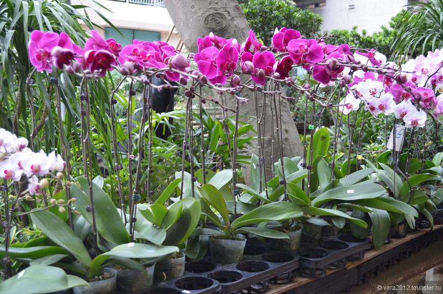 Орхидеи там продаются везде. Иногда целые магазины специализируются на их продаже, поэтому спустя какое-то время их начинаешь воспринимать как некую банальность.