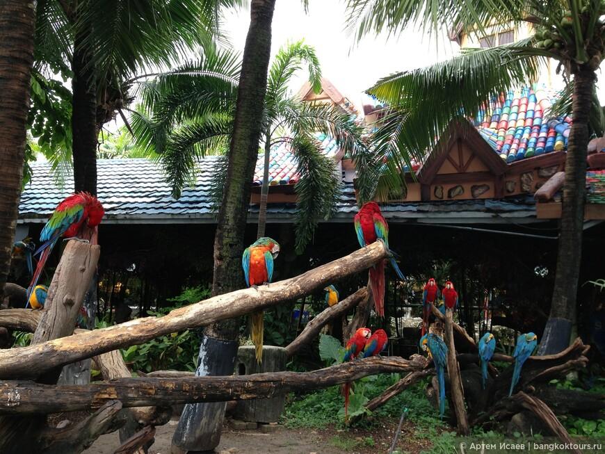 Красный ара (Ара Макао), Мир Сафари, г. Бангкок, Королевство Таиланд.