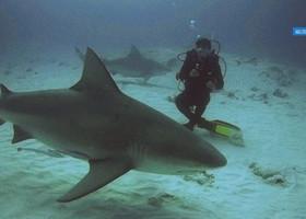 Дайвинг с Бычьими Акулами в Мексике