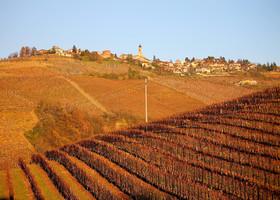 Вино с трюфелями или итальянская глушь III