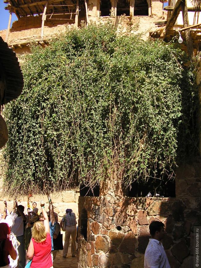 монастырь святой Екатерины-неопалимая купина