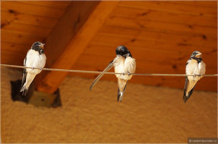 птички3.jpg