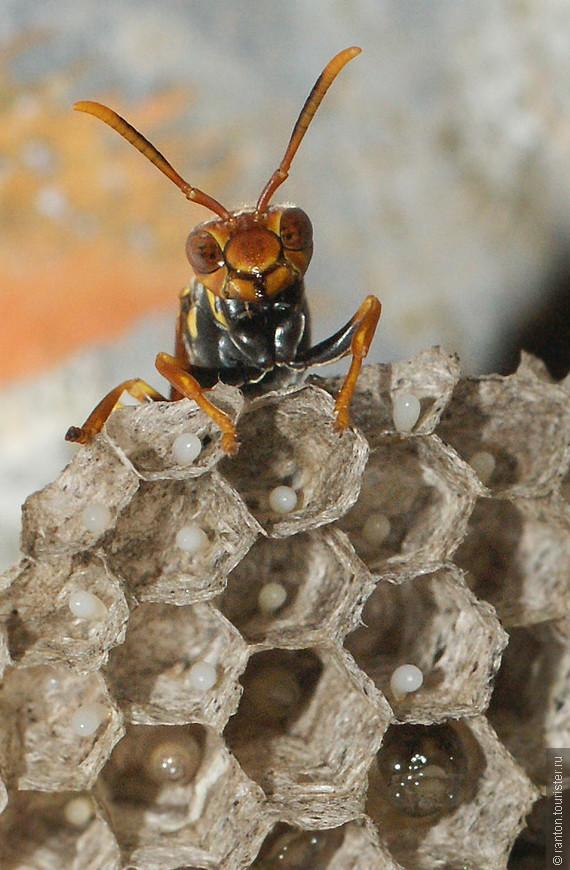 пчелы02.jpg