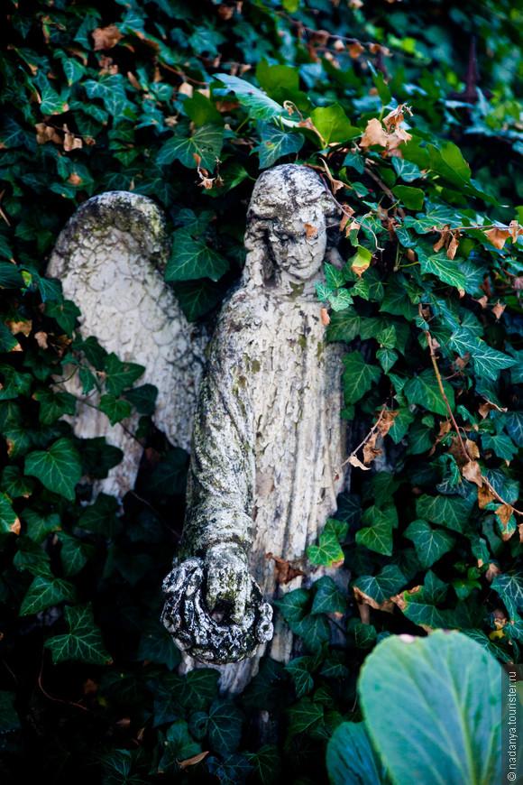 А вот ангел на кладбище вокруг смотрится вполне в тему:) Заросшесть ему даже идет.