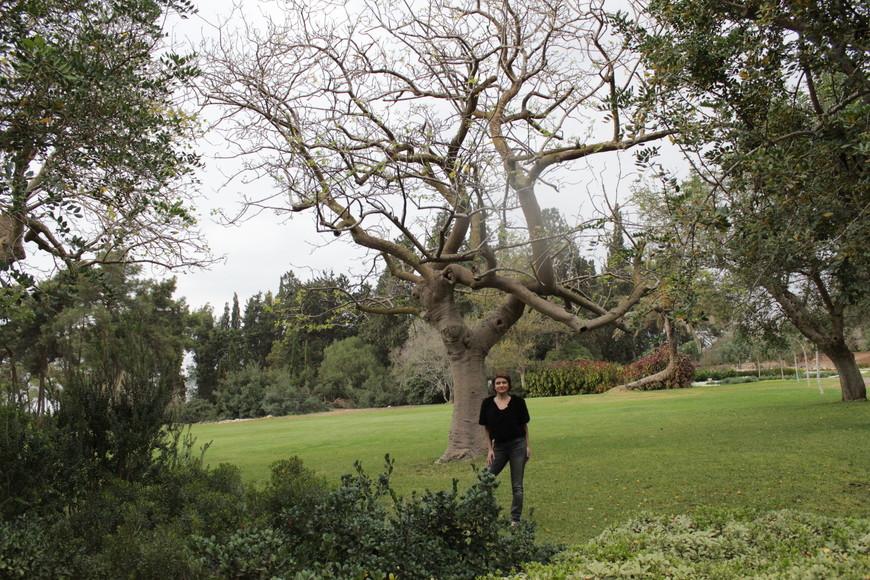 Сад барона Ротшильда, известный также как парк Рамат а-Надив, - это мемориальный парк. Находится парк вблизи Зихрон-Якова – поселения, обязанного своим основанием барону.  Этот человек страстно желал возрождения еврейского государства и не жалел никаких денег для помощи первым еврейским переселенцам. Как-то в сердцах, во время одной из поездок в Эрец-Исраель, барон пожелал быть похороненным в этом живописном месте – у подножия горы Кармель. Благодарные своему благодетелю еврейские поселенцы сразу после смерти барона Ротшильда в 1934 году начали возводить парк в честь него.