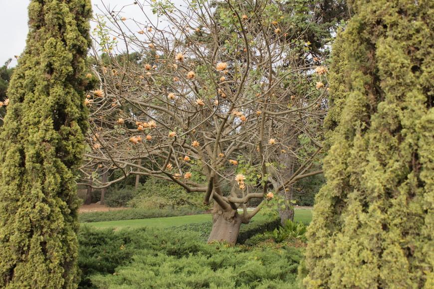 Несмотря на каменистую почву, ландшафтные дизайнеры всего за 20 лет создали настоящее чудо, вырастив удивительно красивый сад из растений, привезенных из разных уголков земли.