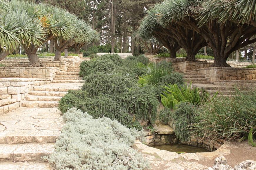 Между Розовым садом и Пальмовой рощей находится смотровая площадка, откуда открывается удивительно красивый вид на парк и его окрестности. Здесь можно видеть живые изгороди, ровные дорожки, клумбы, аллеи, скамьи для отдыха, каменные солнечные часы, фонтаны, искусственный пруд с рыбками, каменную карту Израиля, на которой отмечены 30 поселений, обязанных своим основанием барону Ротшильду.
