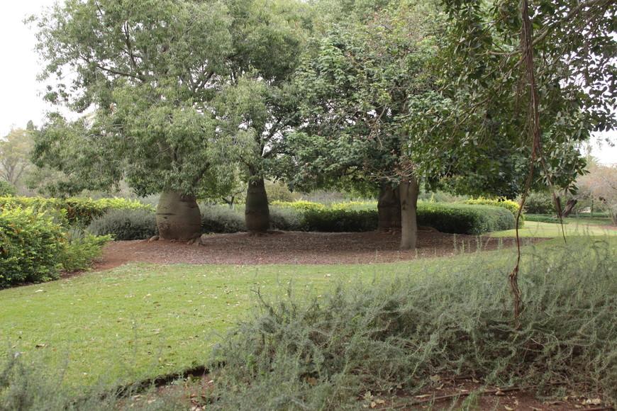Парк Ротшильда – яркий пример той красоты, которую могут создать руки человека. И люди же продолжают внимательно следить за парком: там царит чистота, растения ухожены