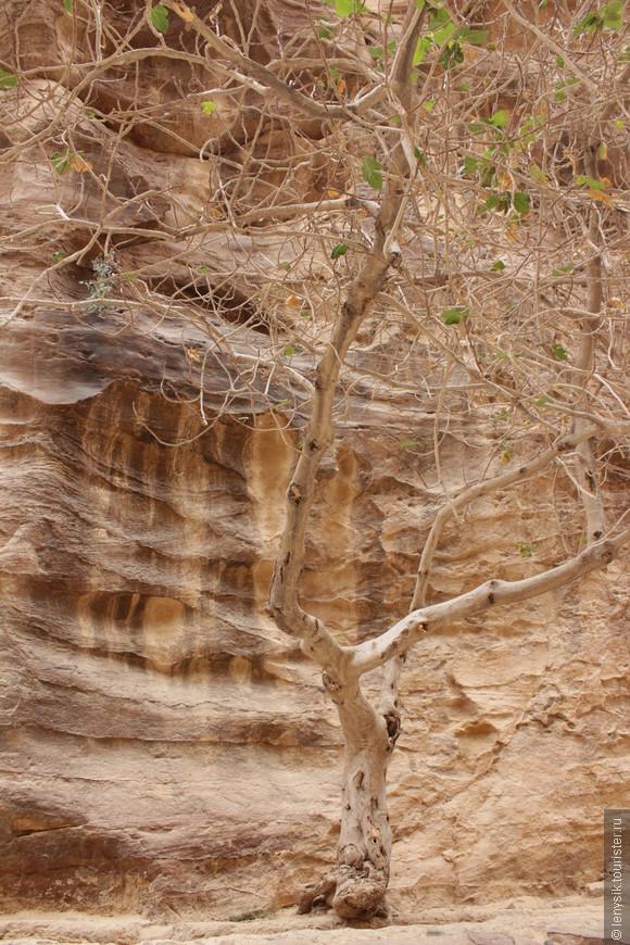 А вот так растут деревья в ущелье.