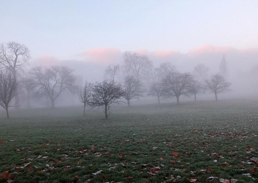 Туманное утро в Гайд Парке