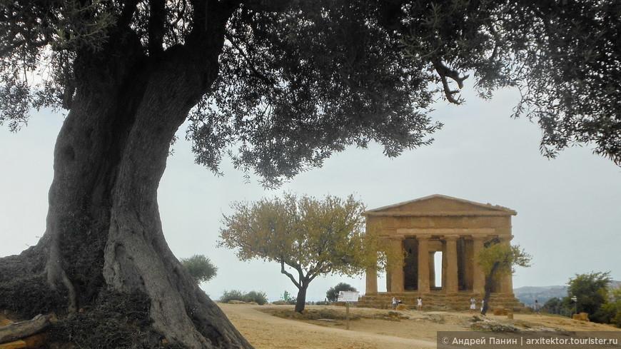 Вид на оливу и храм Согласия.