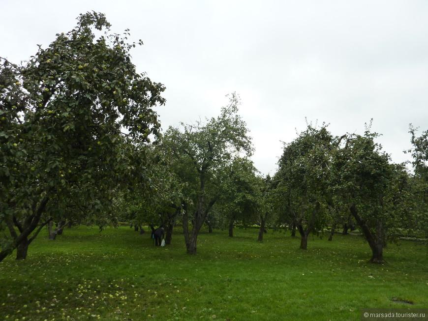 Яблоневые сады. Кстати полно людей просто приходили с пакетами и собирали яблоки.  Вкусные))