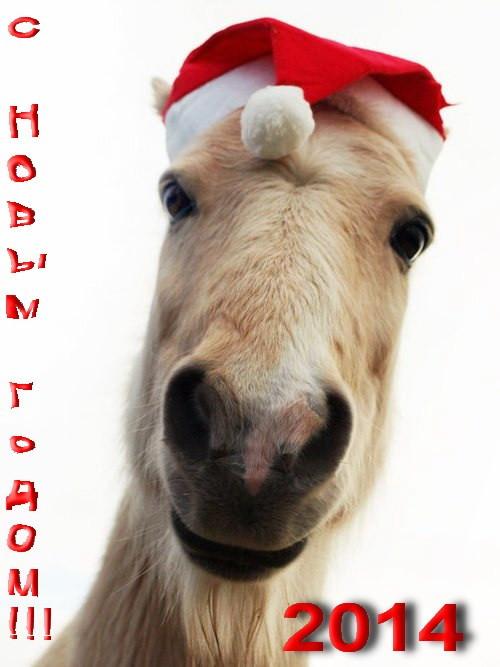 Картинки лошади к новому году прикольные, днем