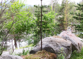 Норвегия. Дерево