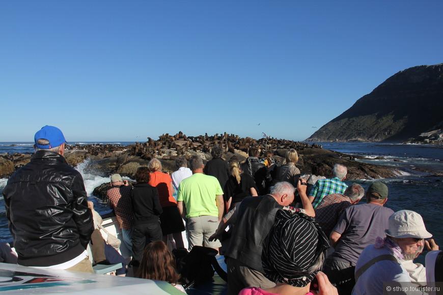 котики недалеко от порта кейптауна