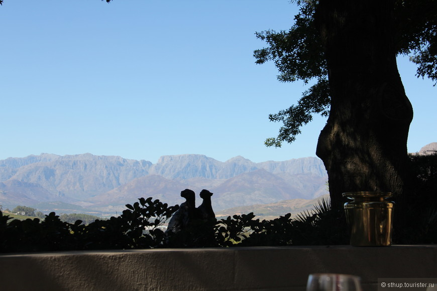 вид из-за столика на винной ферме близ Кейпа