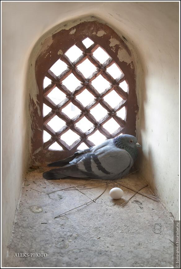 Напоследок, после посещения башни нашему взору открылась вот такая милая картинка. Это создание снесло яичко прямо в башне, хотя здесь все время курсируют вверх-вниз туристы...