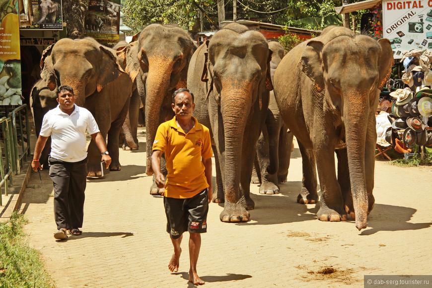 ...по улицам слонов водили