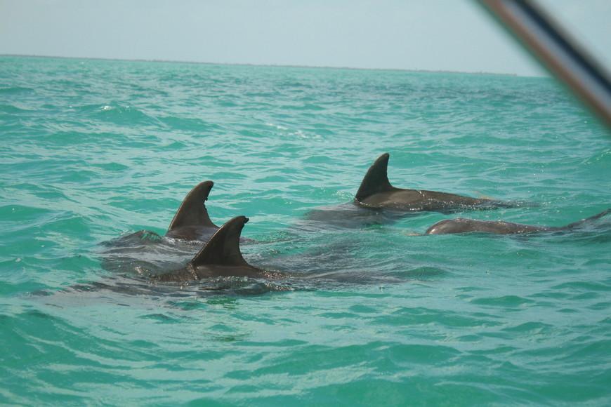 дикие дельфины