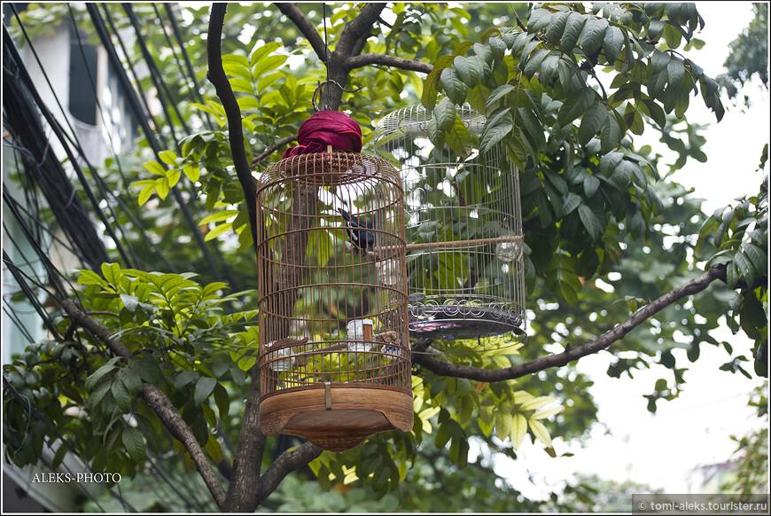 Характерная деталь - в Ханое можно повсюду увидеть клетки с птицами. Часто они висят прямо на улицах, рядом с магазинами и домами вьетов. Таким  вот образом ханойцы как бы приближают природу к себе. И благо, мотоциклы еще ее не вытеснили...